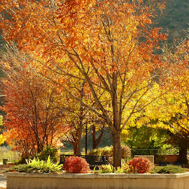 Colorful Courtyard by Laurie DeMent - City,  Street & Park  City Parks