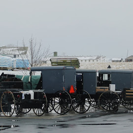 Old Time Transportaion by Anna Tripodi - Transportation Other ( amish, buggy, horse, love it, transportation )