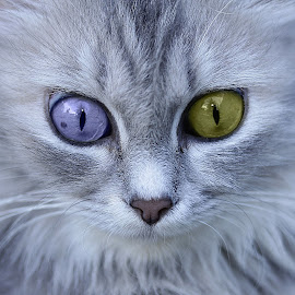 by Andrie Firmansyah - Animals - Cats Portraits