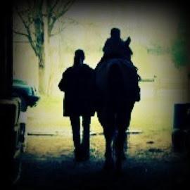 by Tina Wooley - Animals Horses