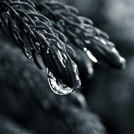 bright drop by Arnab Bhattacharyya - Nature Up Close Leaves & Grasses