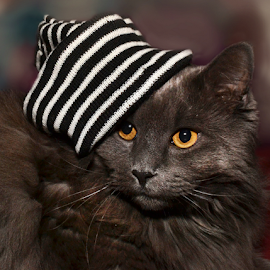 My Dapper Smokey by Corinne Noon - Animals - Cats Portraits ( smokey, cat, furry, gray, hat )