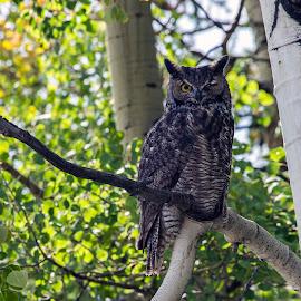 Too Sexy for my branch by David Umphfleet - Animals Birds ( wink, big bird, barred owl, owl, winking )