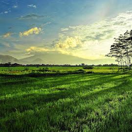 by Deden Mulyadi - Landscapes Prairies, Meadows & Fields