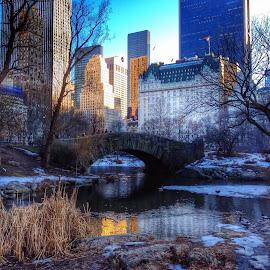 Central Park  by Winnie Basso - City,  Street & Park  Skylines