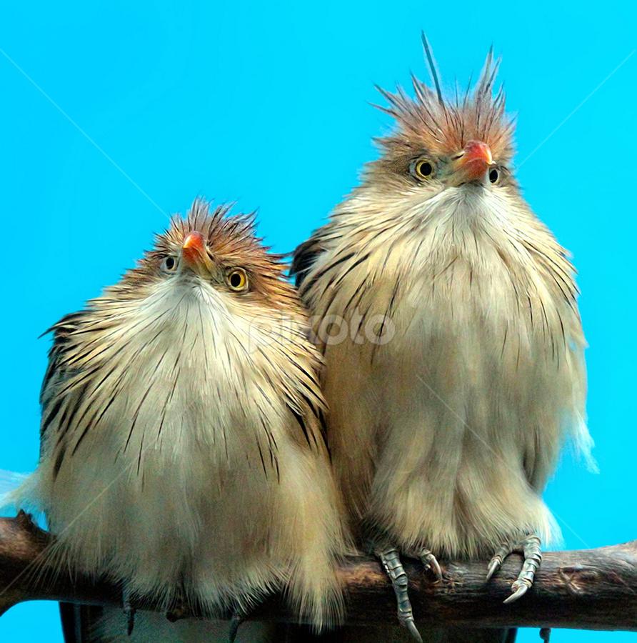 by John Larson - Animals Birds (  )