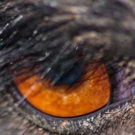 eye see you by Joe Faherty - Animals Birds