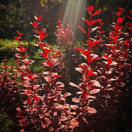 #обалденнаяосень by Vadim Malinovskiy - Instagram & Mobile iPhone