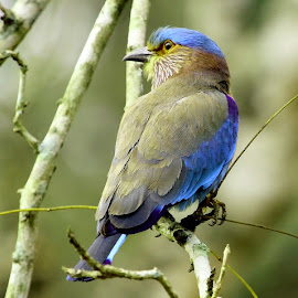 by S Balaji - Animals Birds (  )