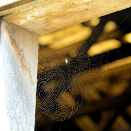 by Sunny Dyck - Nature Up Close Webs ( webs, aracnid, building stories, farmhouse, spider )