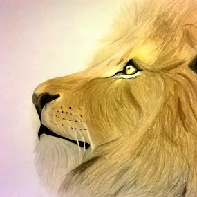 The lion by Viktória Nagy - Drawing All Drawing