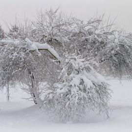 by Zeljko Kliska - Landscapes Weather ( winter, cold, park, nature, snow,  )