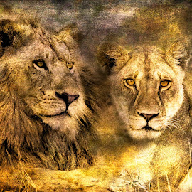 Lions Textured by Gary Want - Digital Art Animals ( okavango delta, kwara, botswana, lion, safari, africa, #wildlife, #locations )