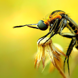Huncback bee fly by Rama Smookerr - Instagram & Mobile Other ( animals, macro, insects & spiders, macro photography, macro mania, macro world,  )