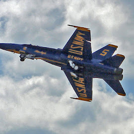 Blue Angels  by Sarah Jenkins - News & Events Entertainment (  )