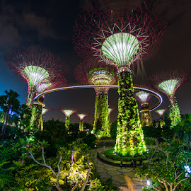 Marina Bay Sands by Nikon Guy - City,  Street & Park  City Parks ( huge tree, marina bay sands, night, marina, singapore )