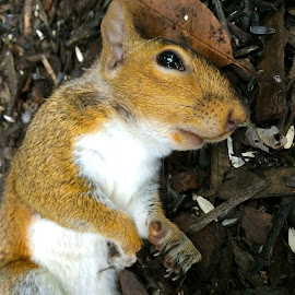 Squirrel with iPhone by Tyrell Heaton - Instagram & Mobile iPhone ( iphone, squirrel )