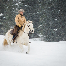 Coyboy in the Snow by John Klingel - People Portraits of Men ( horses, clydedale, triple d )