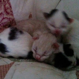 New Babies, 8 hours old by Lyz Amer - Animals - Cats Kittens ( kittens )
