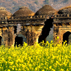 the guardians by Vidur Jyoti - Landscapes Prairies, Meadows & Fields ( mustard, ruins, alive, crop, abandoned )