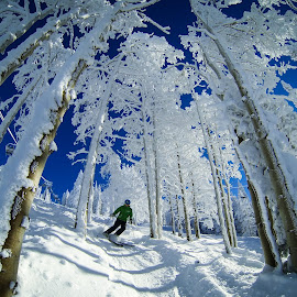 TreeSkiing by Matthew Eaton - Sports & Fitness Snow Sports ( skiing, steamboat, winter, matthewbephotography, snow, powder, treeskiing, colorado, trees )