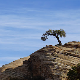 Lone Tree by Victor Mirontschuk - Landscapes Caves & Formations ( tree, nature, landscape], places, travel, rocks )