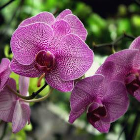 by MasHeru Sucahyono - Flowers Flower Gardens