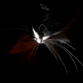 *** by Jurijs Ratanins - Instagram & Mobile Android ( look, mobilography, wiskers, pet, portrait, animal )