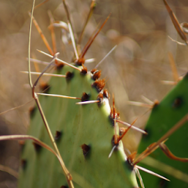 Spikes by Benito Flores Jr - Nature Up Close Other plants (  )