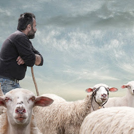 My livelihoods by George Leontaras - Digital Art Animals ( clouds, hellas, volos, digital art, greece, skjy, fine art, sheep, pelion, man, manipulstion )