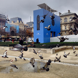 Île de la Cité by Ingrid Crouse - Buildings & Architecture Public & Historical