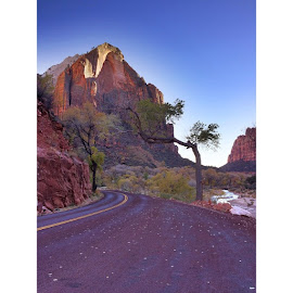 : Beautiful tree over the road in Zion National Park, Utah! #Zion #all_shots #all_my_own #exklusive_shot #exploring_shots #fab_shots #fabskyshots #fabflora #hot_shotz #hdr_captures #ig_daily #IG_4every1 #ig_naturelovers #justgoshoot #jj_nature #jj_unitedstates #jaw_dropping_shots #live_planet #landscape_captures #master_pics #naturehippys #nature_uc #nature_perfection #treeshunter #rsa_nature #royalsnappingartists #stunning_shots #worldcaptures #wu_northamerica by Katie Theien - Instagram & Mobile iPhone ( national park, zion national park, tree, iphone photography, road, iphone, landscape, zion )