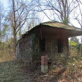 Old Store Building by Terry Linton - Buildings & Architecture Decaying & Abandoned ( building, wood, trees, bricks, abandoned )