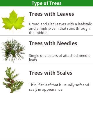 North American Trees