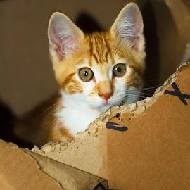 lovely!! by Guilherme  Junior - Animals - Cats Kittens ( kitten, cat, animals )