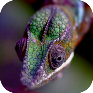 Chameleon Live Wallpaper