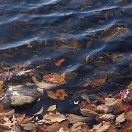 All Fall Down by Marilyn Casson - Nature Up Close Water