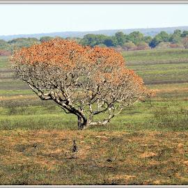 by Amanda Swanepoel - Nature Up Close Trees & Bushes