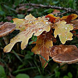 Autumn Morning Sonatina by Marija Jilek - Nature Up Close Other Natural Objects ( nature, grass, drops, plants, other (natural) objects, leaves, branches, mushrooms )