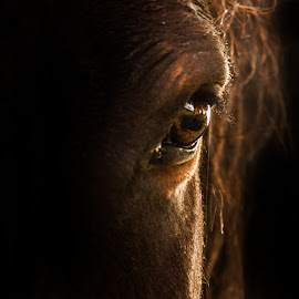 He's watching you by Arti Fakts - Animals Horses ( hide, hairs, horse, fur, secret, artifakts, light, eye,  )