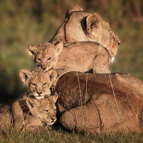 Close Family  by Karen Celella - Animals Lions, Tigers & Big Cats ( wild, mother, family, safari, wildlife, cubs, lions, tanzania, africa, Africa, Safari,  )