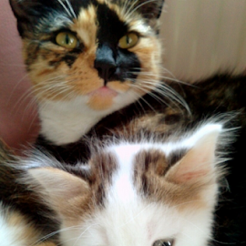 cuddle time by Lyz Amer - Animals - Cats Kittens ( kitten )