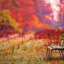 lonely bench in park by David Ovidiu - City,  Street & Park  City Parks ( , public, bench, furniture, object, fall, color, colorful, nature )