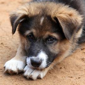 *** by Zanna Zaka - Animals - Dogs Puppies ( animals, puppies, dogs, latvia, animal shelter )