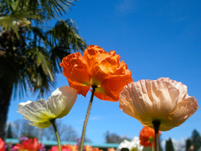 fleursbotanique-2.jpg