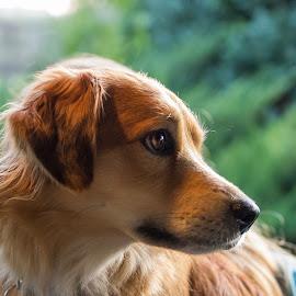 Micky by Martin Jahn - Animals - Dogs Portraits ( braun, czech republic, dog, portrait, animal )