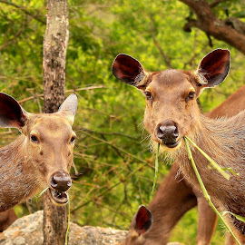 Sambaar by Nikhil Jahagirdar - Animals Other ( leaves, perfect sambaar portrait eating )