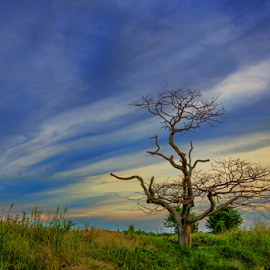 Never Ever Stop to Dance by KIN WAH WONG - Landscapes Sunsets & Sunrises ( nature, old tree, sunset, sunsets, decay tree, never ever stop, scenery, landscapes, landscape, dance, evening, dead tree )