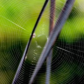 Web by Sayeeram Rengaraj - Nature Up Close Webs