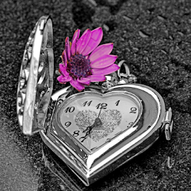 by Dipali S - Artistic Objects Other Objects ( single object, clockwise, chrome, clock face, daisy, dial, jewelry, equipment, time, metal, timer, instrument of time, minute hand, isolated, clockworks, selective color, clock, watch, elegance, instrument of measurement, close-up, luxury, concepts and ideas, man made object, second hand, accuracy, tachymeter, pwc )